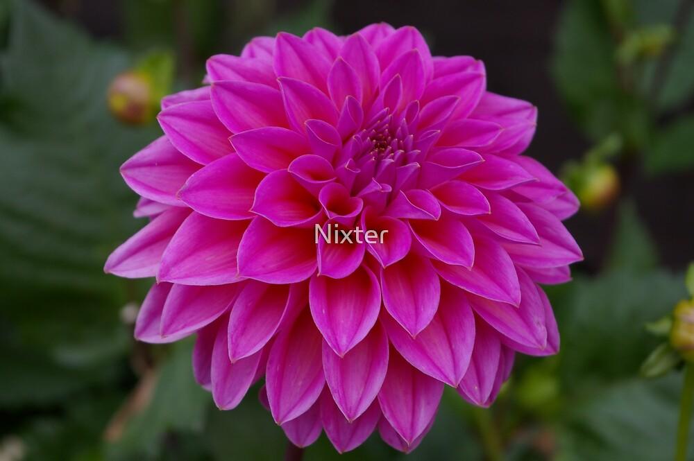 pink by Nixter