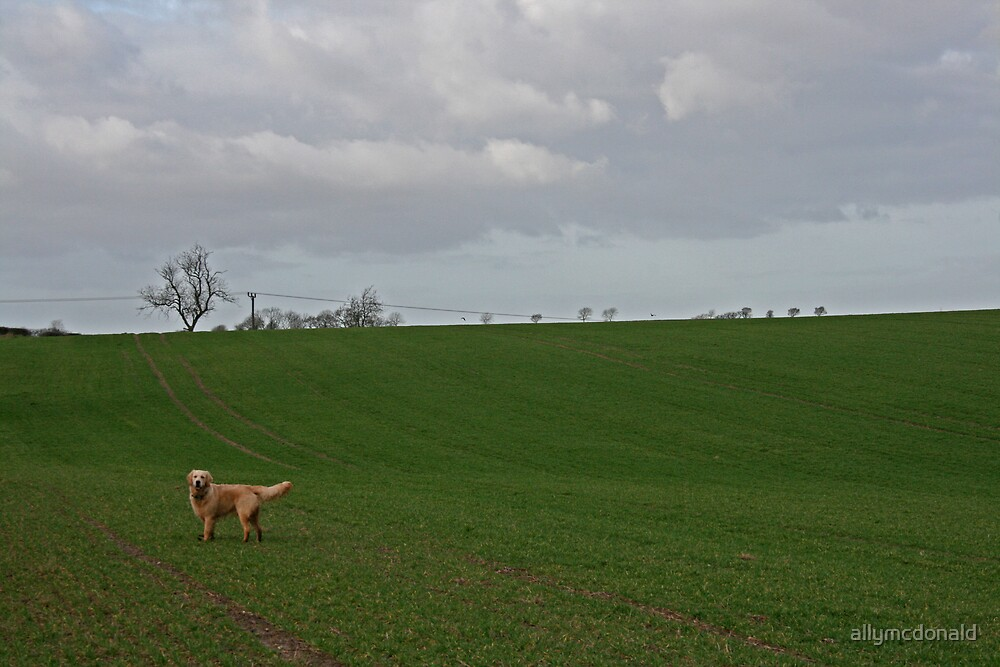 Where a dog loves to be by allymcdonald