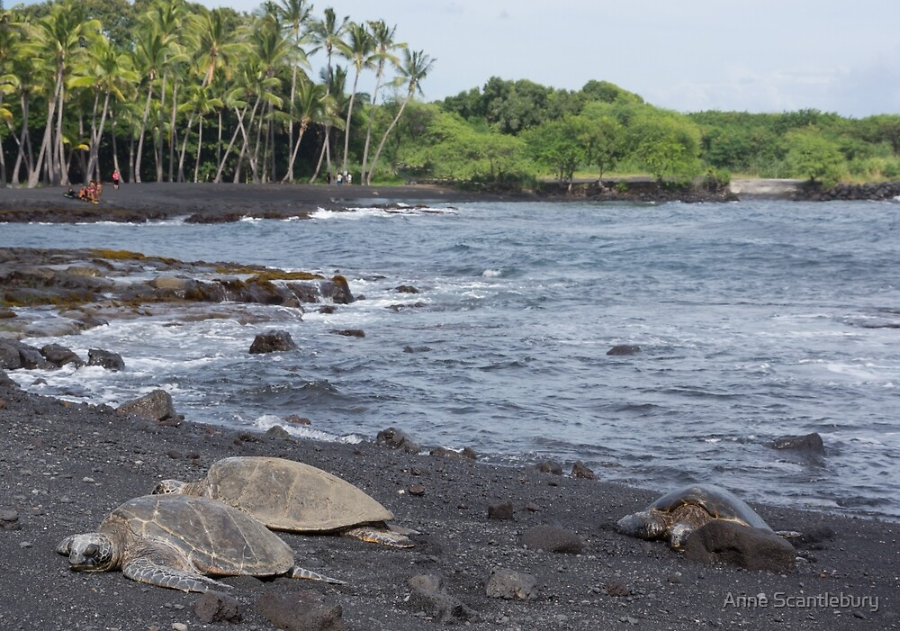 turtles at Punaluu by Anne Scantlebury