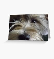 BIGGLES Greeting Card