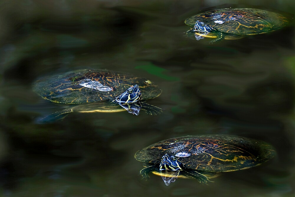 Turtle Dreams by Michael Wolf