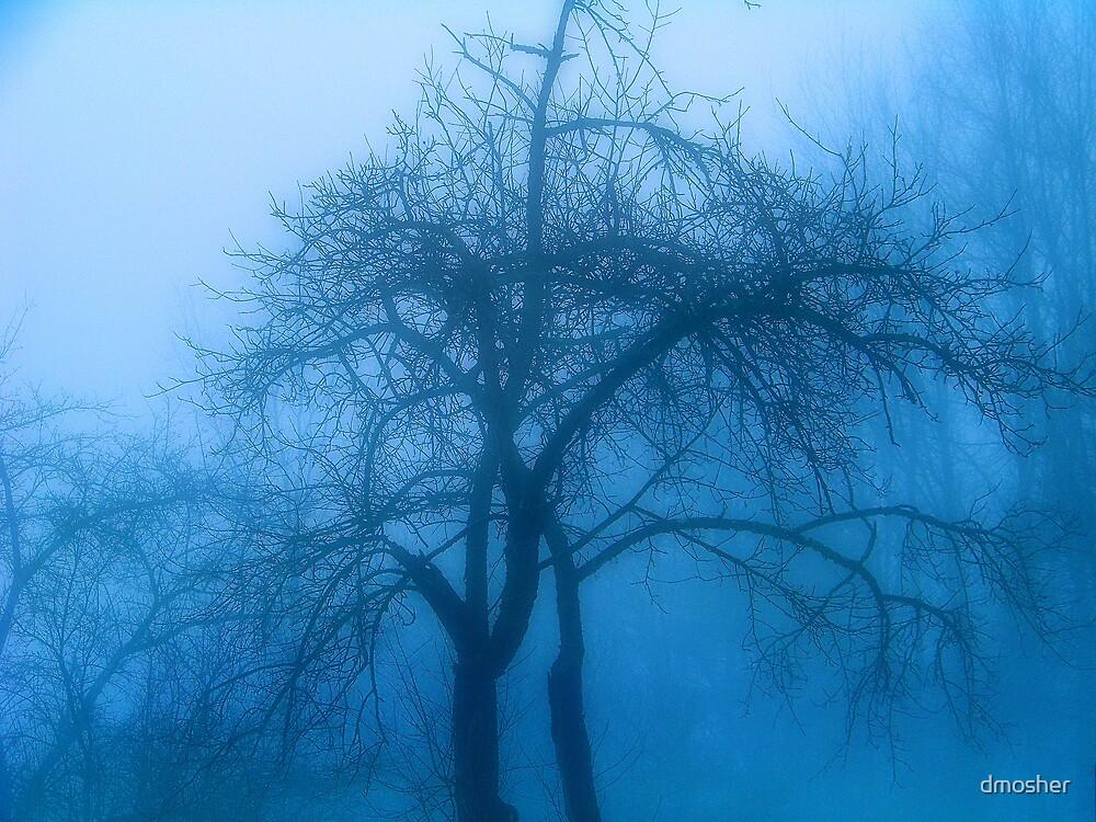 Morning Fog by dmosher