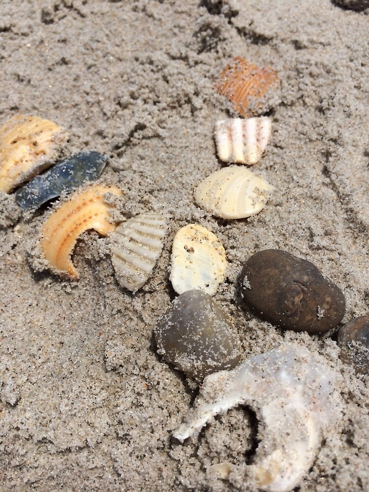 Shells in the sand by Hickoryhill