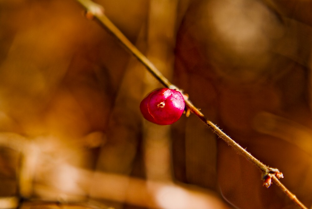 Berry Close by Rod  Adams