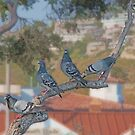Four Pigeons by Eileen McVey