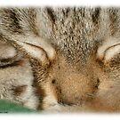 Sleepy Kitty by Crockpot