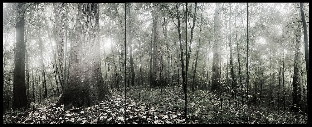 Joyce Kilmer Memorial Forest by jarrid spicer