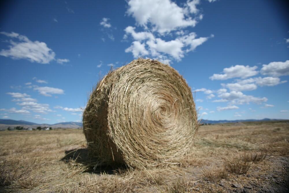 Hay by Jessica Lynn