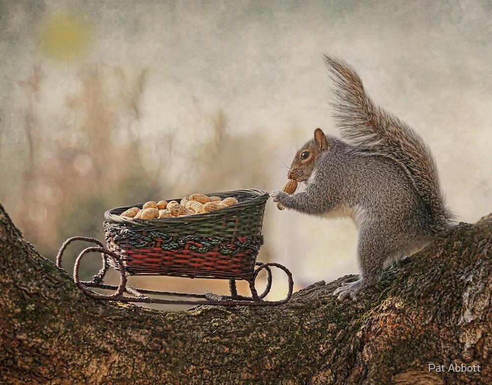 Winter Squirrel by Pat Abbott