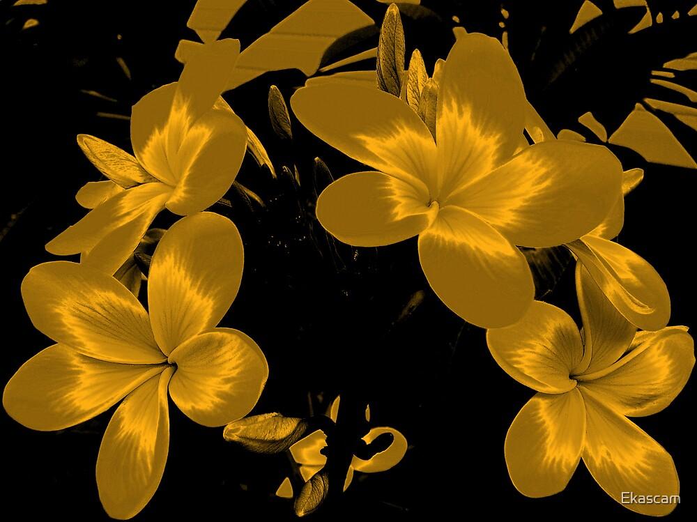 GOLD SATURN by Ekascam