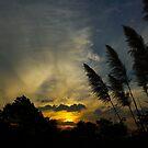 Sunset 2, April 2011 by CrismanArt