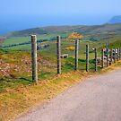 The Great Orme, Llandudno, Wales by trish725