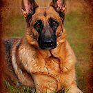 German Shepherd Dog Portrait by Angie Tirado