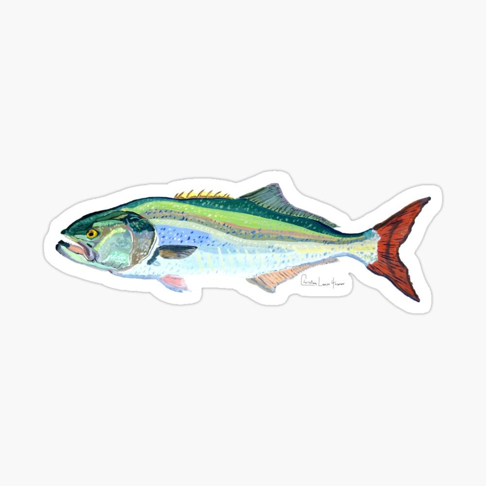 Bluefish Sticker