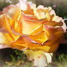 *Specks Yellow Rose - Spring 2016* by EdsMum