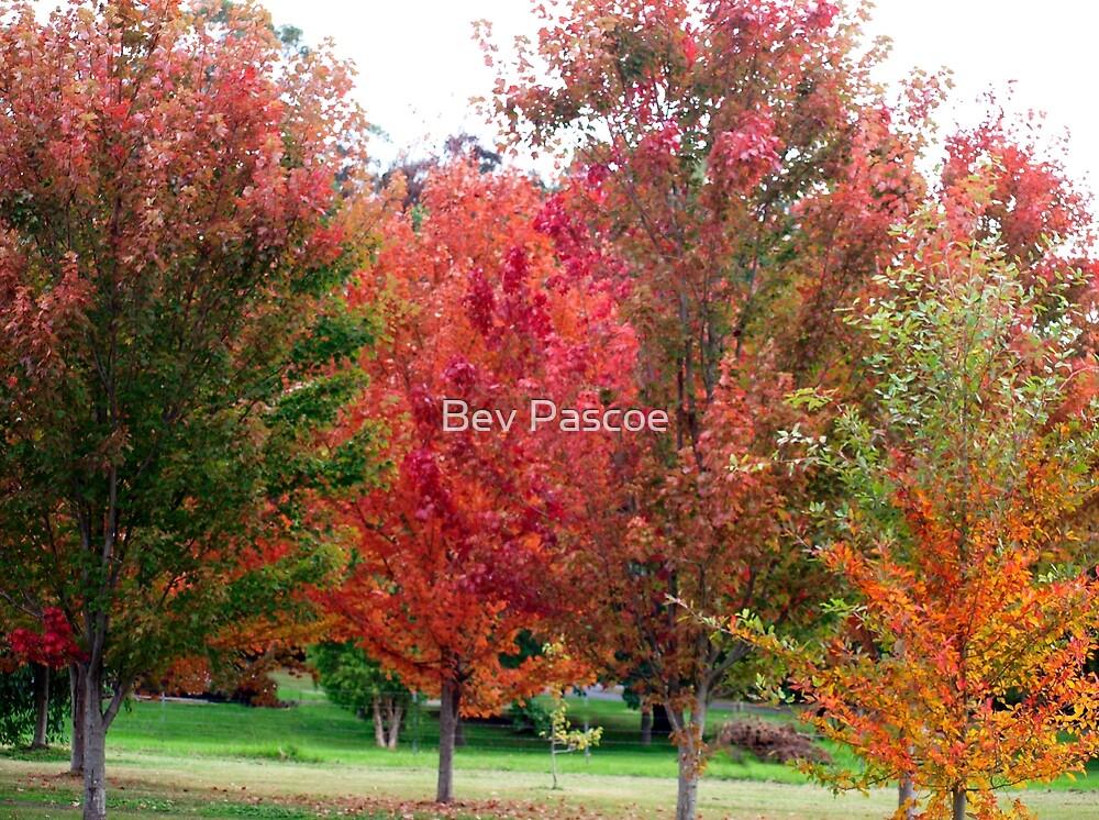 Autumn colours  by Bev Pascoe