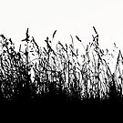 Long grass - whispers of summer by Ingrid Beddoes