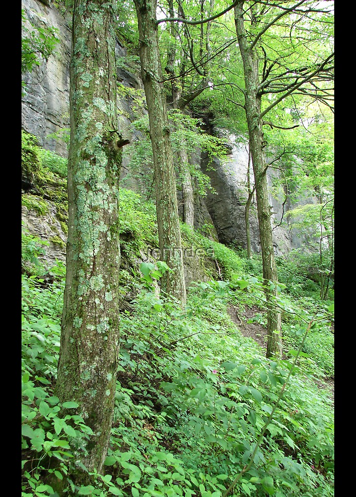 Mossy Trees On Indian Ladder by jenndes