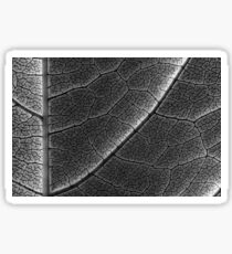 Infrared Leaf Texture With Visible Stomata Covering The Outer Epidermis Layer Sticker