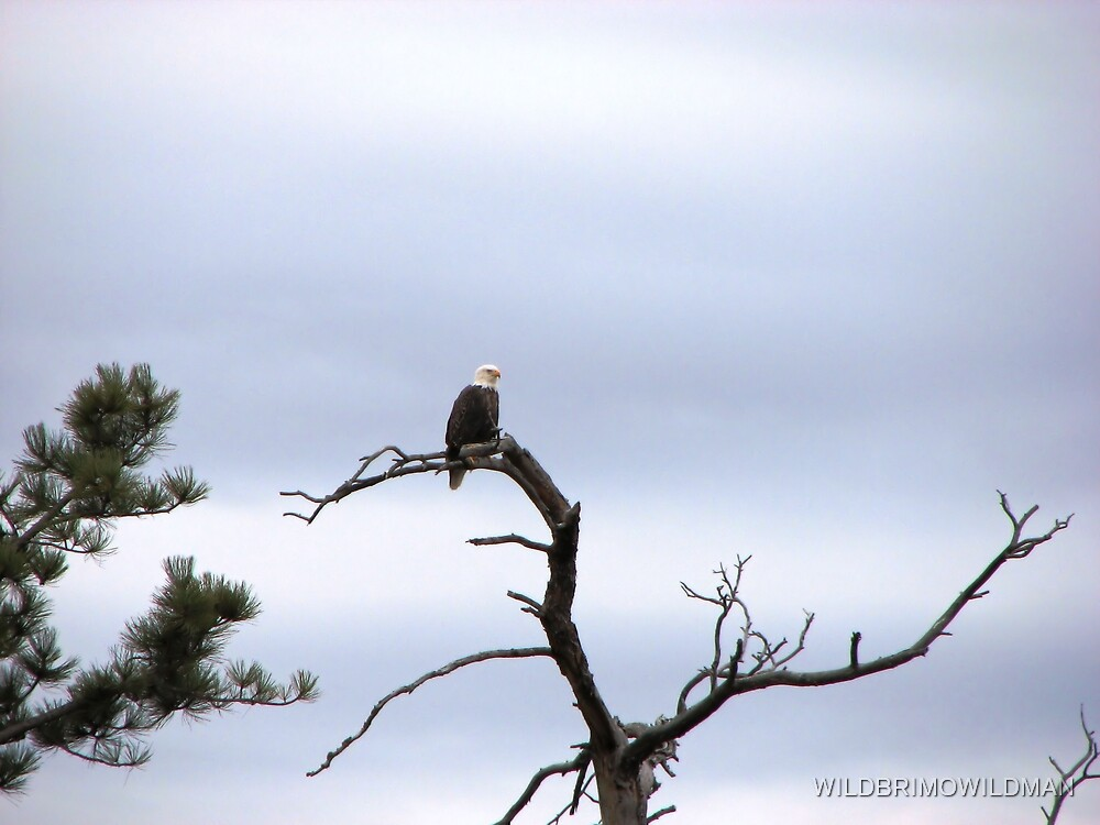 Out On A Limb! by WILDBRIMOWILDMAN
