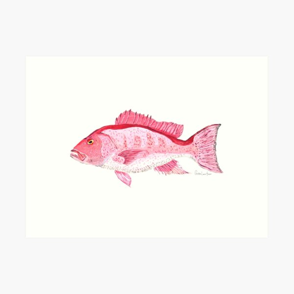 Red Snapper Art Print