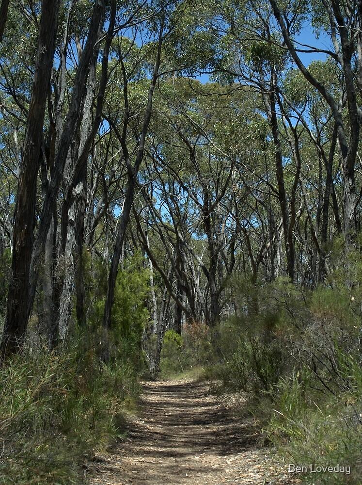 Mylor Conservation Park by Ben Loveday