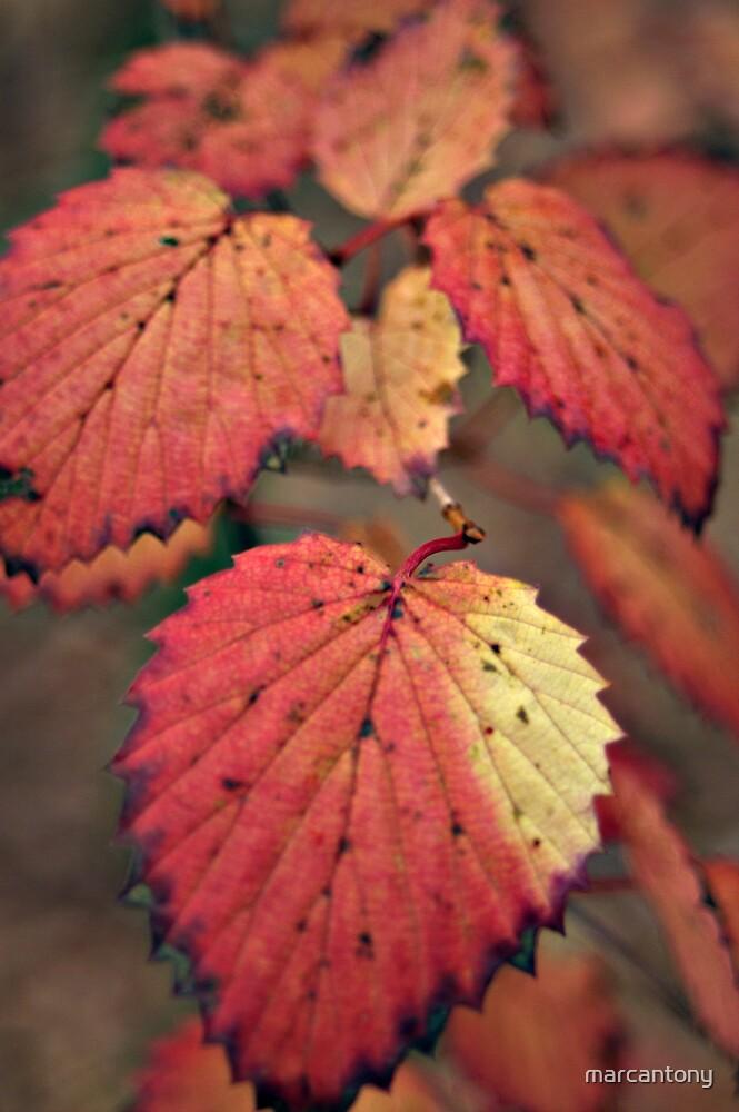 Fall Foliage, Huntley Meadows Virginia by marcantony