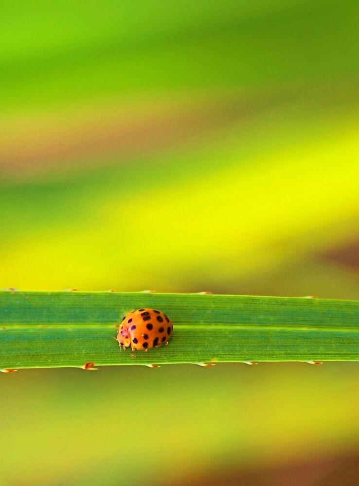 Ladybug - Laguna Whitsundays by JenniferW
