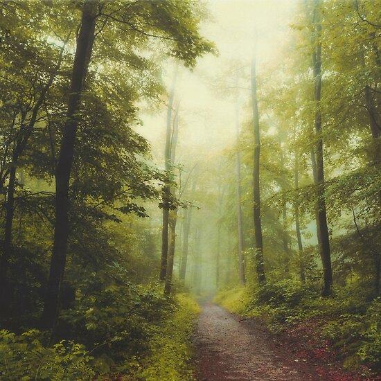 Lange Waldwanderung von Dirk Wuestenhagen