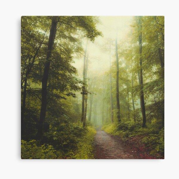 Long Forest Walk Canvas Print