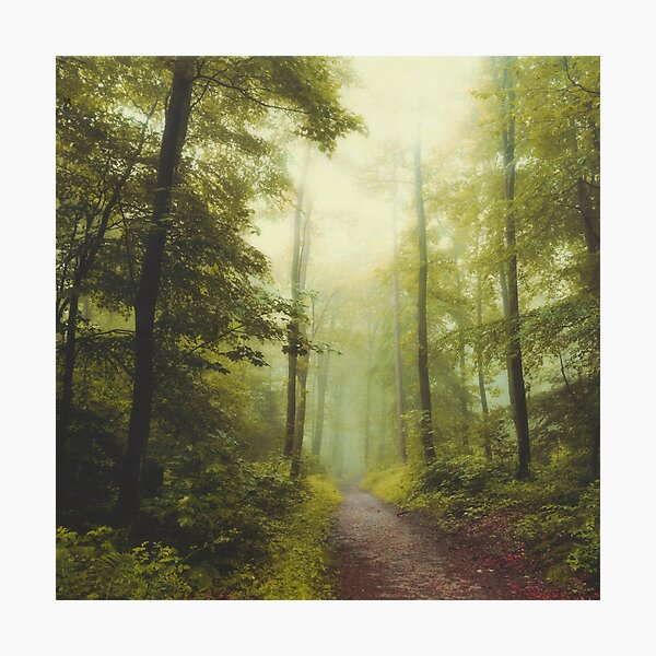 Long Forest Walk Photographic Print
