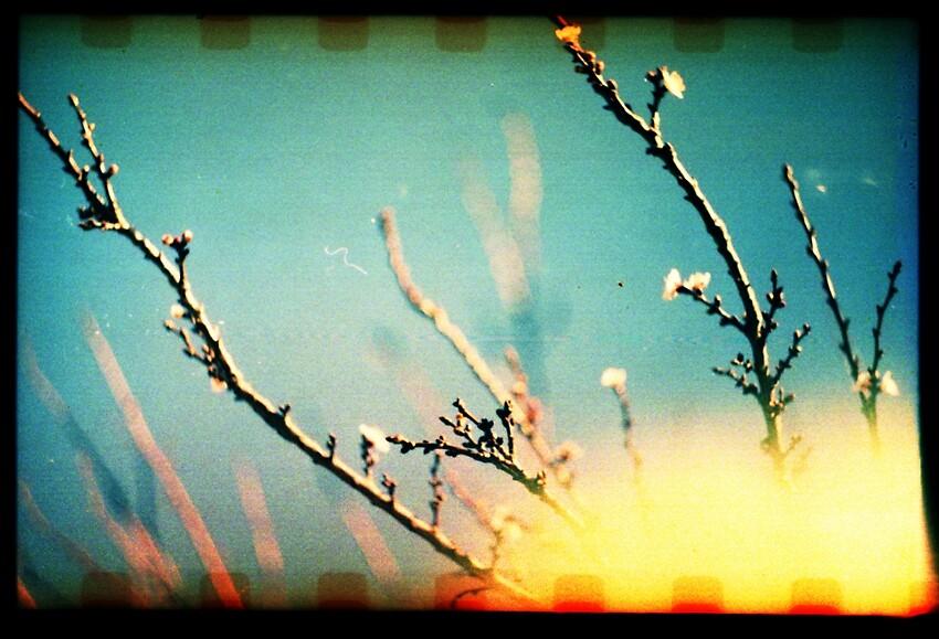 spring by quixote
