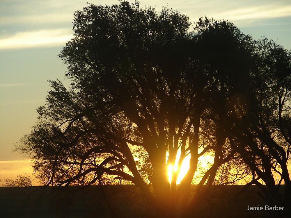 Morning in Elm Creek  by Jamie Barber