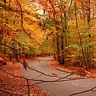 Autumn In Holmdel Park by Angie Tirado