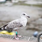 The lady seagull by chezjulie