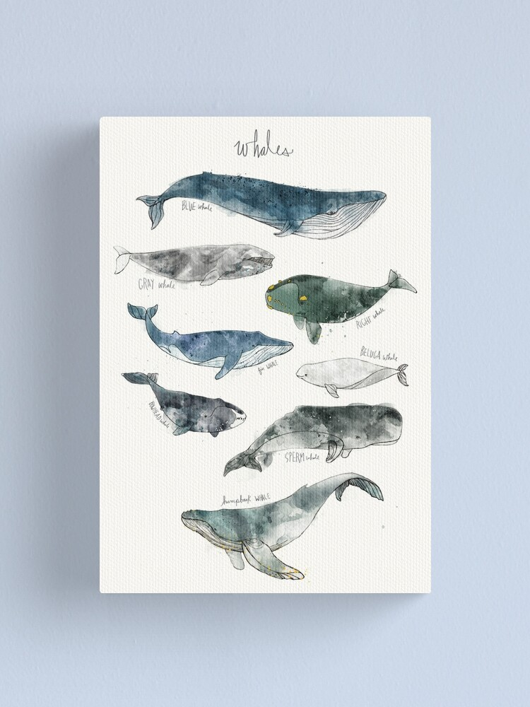 Alternate view of Whales Canvas Print
