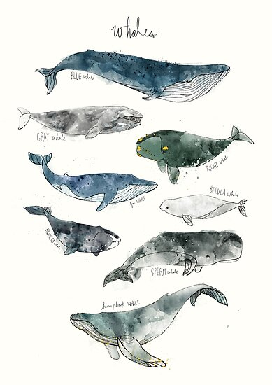 Whales by Amy Hamilton