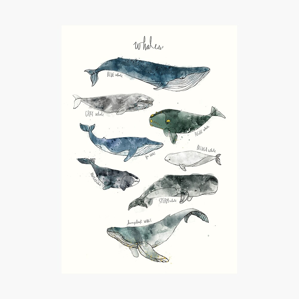 Whales Photographic Print