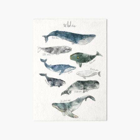 Whales Art Board Print