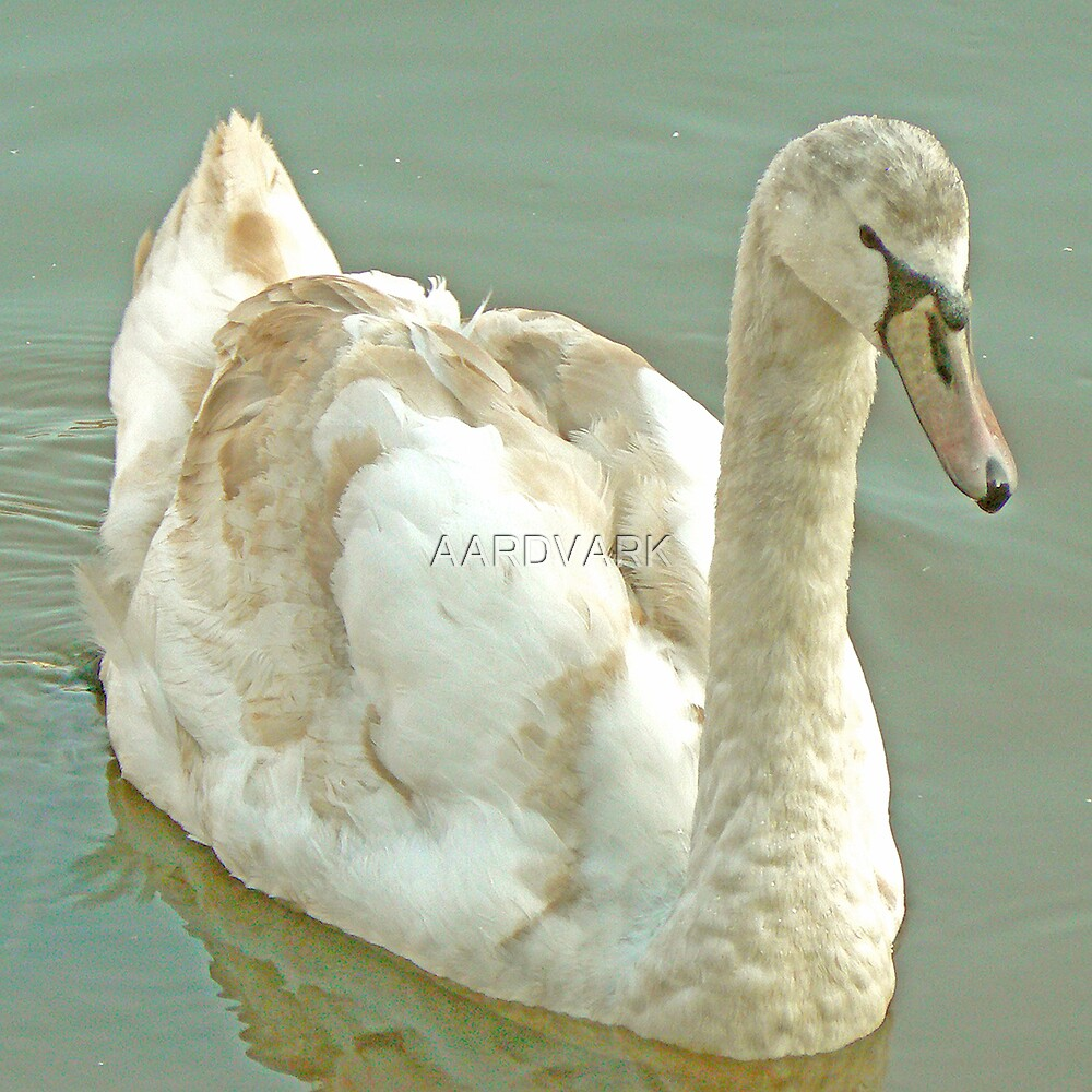 """""""Not Long Now And They'll Not Be Calling Me An Ugly Duckling!"""" by AARDVARK"""