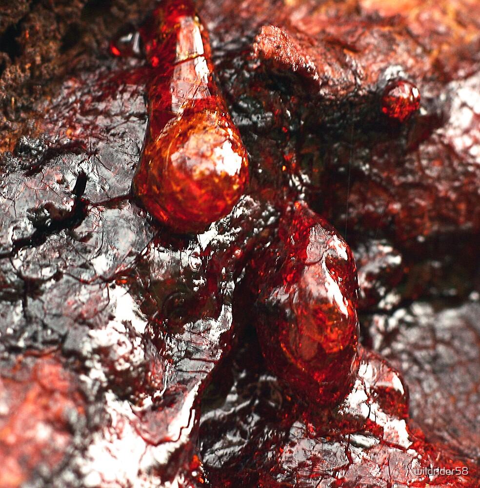 gum sap by wildrider58