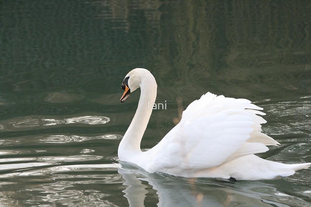 swanning around by Iani