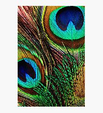 Peacock Feathers. Colored Photography Photographic Print