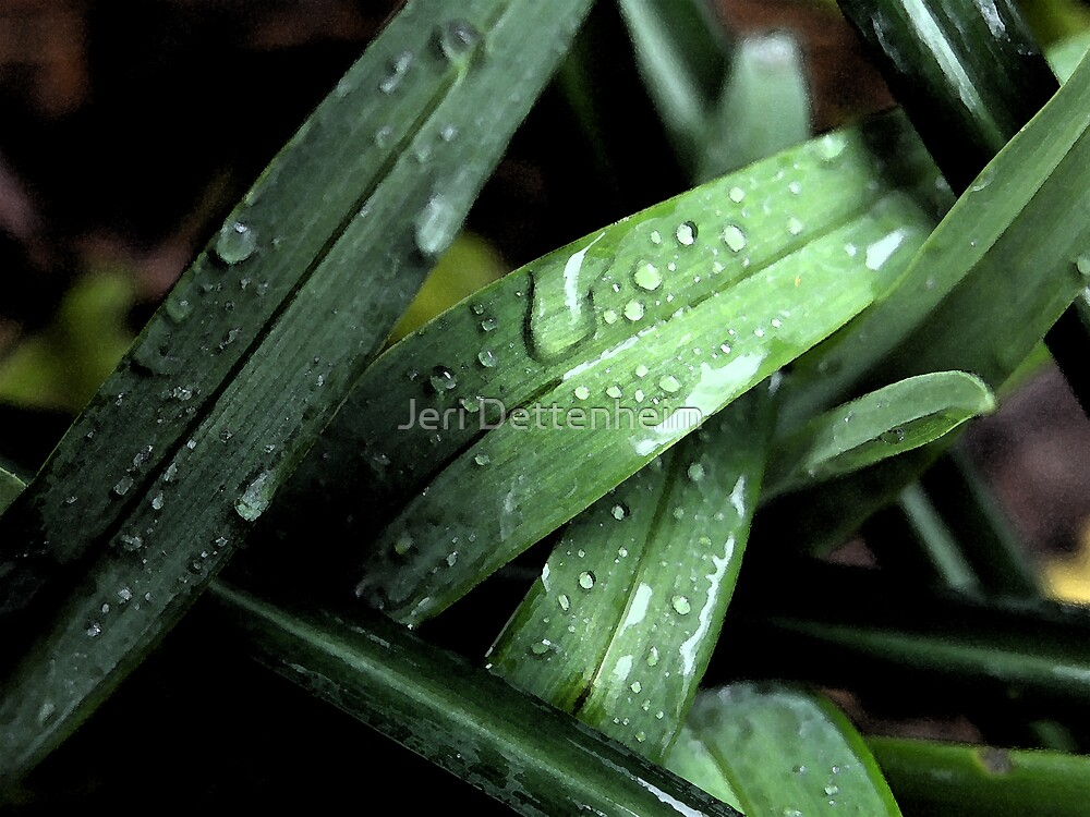 Changing of the Green by Jeri Dettenheim