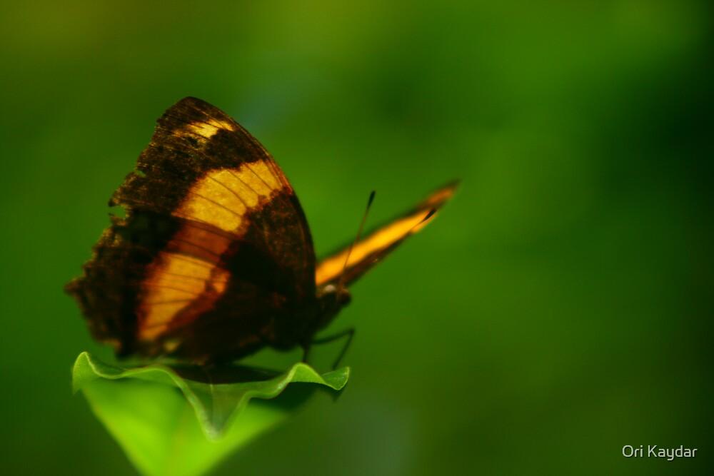 Another Orange Life by Ori Kaydar
