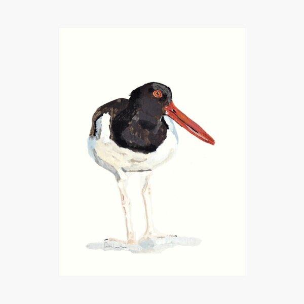 Oyster Catcher Art Print