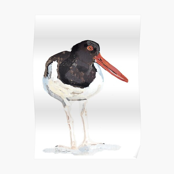 Oyster Catcher Poster
