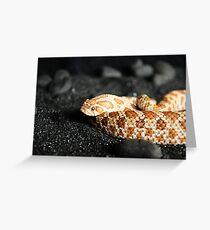 Western Hognose Snake Greeting Card