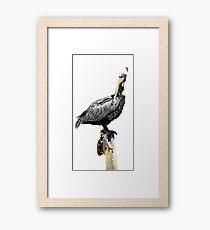 Pelican No.5 Framed Print