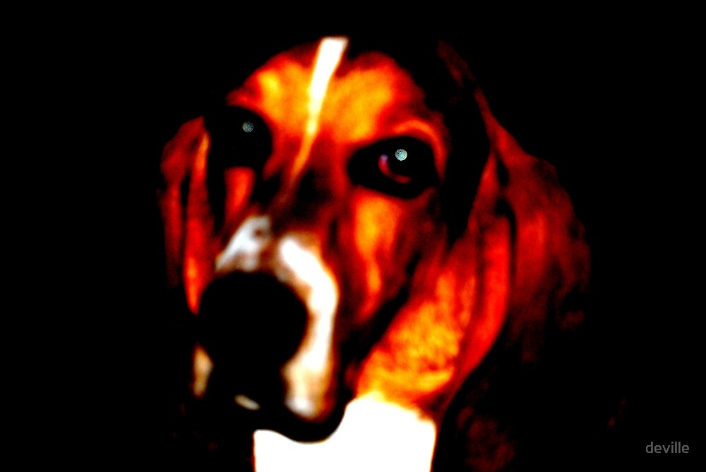 Copper after barking at the moon by deville